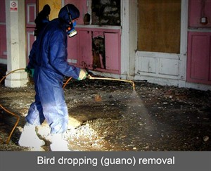 bird dropping guano removal