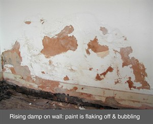 rising damp proof course chemical injection electro osmosis dpc northern ireland NI